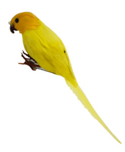 Parrot yellow